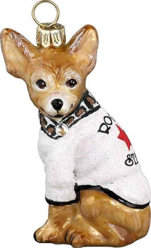 Chihuahua w/Rock Star Sweater
